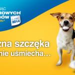 Bezpłatne badania dla psów / Lipiec Misiącem Zdrowych Zębów
