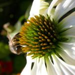 Obchody Wielkiego Dnia Pszczół w województwie świętokrzyskim